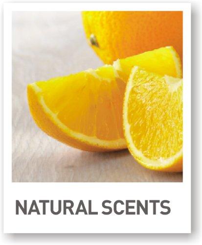 Ivyline-Bolsius-Velas-de-t-perfumadas-antitabaco-16-x-38-mm-18-unidades-0-3